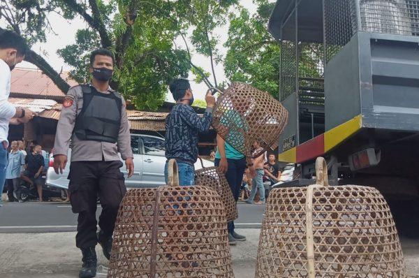 Polisi Gerebek judi Sabung Ayam di Karang Siluman
