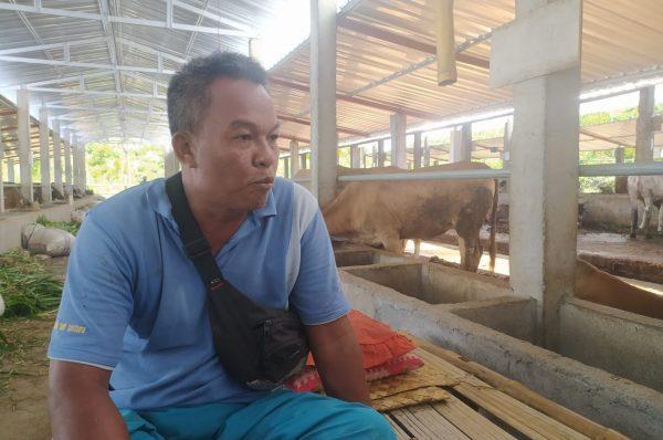 Program Desa Seribu Sapi dari Kementan Belum Tuntas?