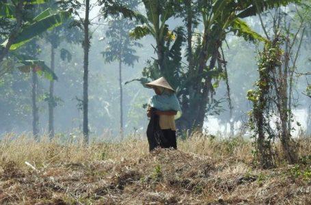 Bos Walet-Notaris Merasa jadi Korban Pembeli Tanah